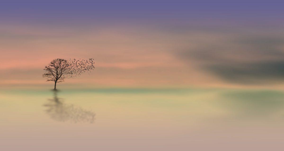 dawn-3358468_1920-1200x639.jpg